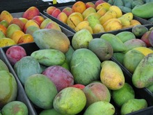 Fresh Mango Fruit class 1 Fresh Mango high quality for sale