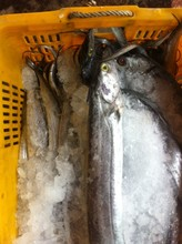 wholesale ribbon seafood frozen fresh new ribbon fish price(A grade)