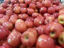 2013 new crop fresh red apple