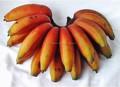 ส่งออกกล้วยจากอินเดีย