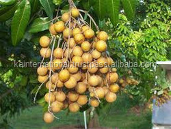 Hot Product Amazing Longan Fruit in VietNam good for heathly