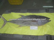 20KG UP FROZEN YELLOW FIN TUNA WHOLE/GILLED AND GUTTED