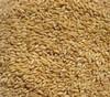 Premium soft Milling wheat