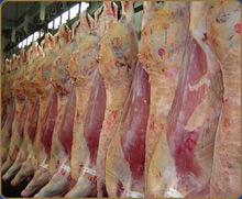 Frozen Lamb, Mutton, Beef, Veal ,Goat, Camel, Horse Meat