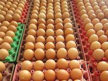GIMEX VIET NAM - chicken egg