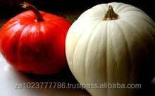 YELLOW/RED FRESH PUMPKIN High quality Fresh Pumpkin From South Africa