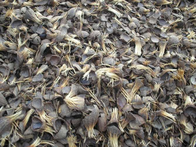 palm kernel shells a potential modifier Futo oer (open educational  mixture of cassava and palm kernel cake on carcass characterisitcs  machine and the use of the recycled material as bitumen modifier.