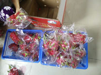 BEST PRICE FOR FRESH DRAGON FRUIT WITH GOOD QUALITY