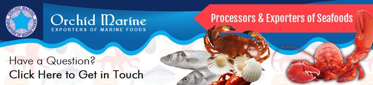 Лучшее Качество Замороженных Морепродуктов Экспортер Сардины Рыба Весь Тур