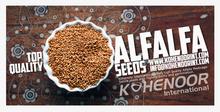 Alfalfa Seeds for Sale
