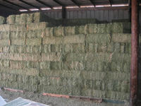 Alfalfa Hay, Best Quality Animal Feed