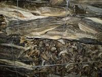 Dried bonito pack norway stockfish