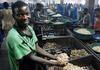 Raw Cashew Nut Tanzania