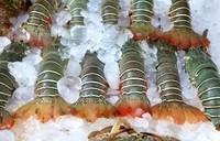 Frozen Whole Boston Lobsters
