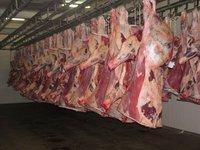 Frozen halal boneless beef Meat for Sale!!!