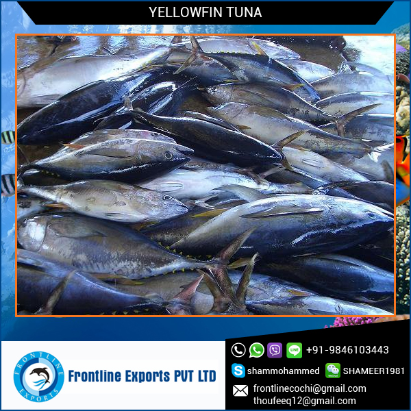Fresh chilled yellowfin tuna buy fresh chilled yellowfin for Calories in tuna fish