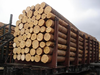 White and Yellow Pine Logs