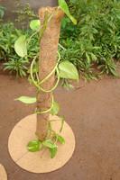 Plant Trellis Pole for Garden