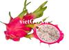 Natural Dragon Fruit/Pitaya with Low Price