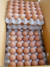 Farm fresh chicken Eggs available for sale