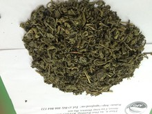 Green Tea - Great class - New season in Moc Chau