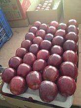 Fresh RED GREEN GOLDEN Apple VERY HIGH GRADE