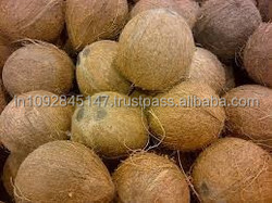 Best Indian Coconut for Mauritius