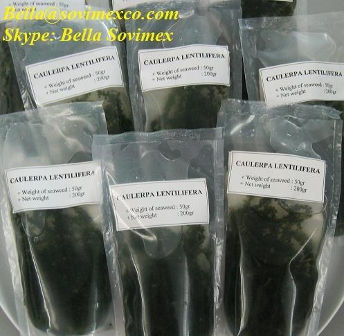 salted seagrapes(in brine).jpg