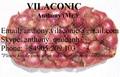 Shallot/cebolla roja de viet nam - anthony.vilaconic@gmail.com