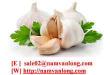 garlic with high quality and good price