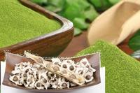 Supply nature moringa seeds for oil extraction