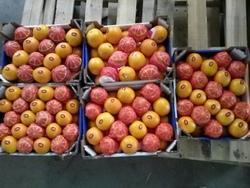 fresh egyption Orange With ( 44/48/56/64/72/80/88/100/105/113/125 ) size