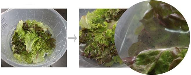 Чистый Натуральный Фруктовый и Овощной Моющего Средства