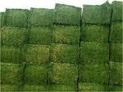 Best Quality Alfafa Pellets, Alfafa Hay Grass, Cloves Grass For Sale