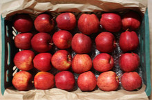 Best Quality Class 1 Fresh Red Delicious Apple