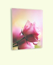 Rose's pictures printed on canvas with frame