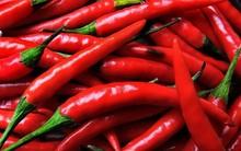 Indian Dry chilli teja s17