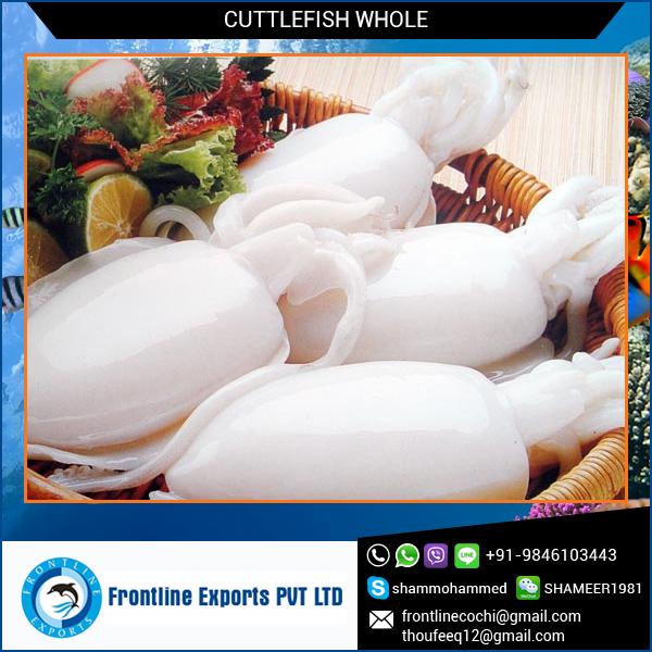 Cuttlefish-Whole.jpg