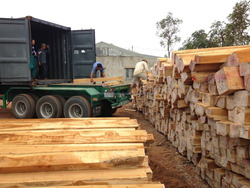 Teak Type and Round Shape Teak Logs Brasilian