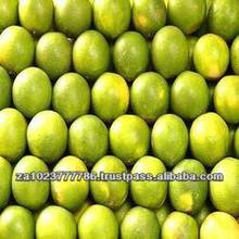 Fresh Citrus Fruits, Valencia Oranges & Lemons high quality Hot Sales