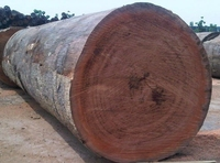 Doussie Logs and sawn timber for sale
