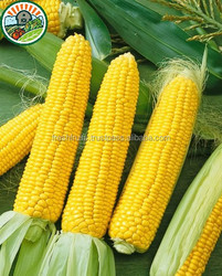 Cheapest Price Yellow Corn /White Corn /Maize For Sale From Vietnam