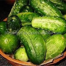 Cucumber Oil (OEM/ODM) /Pure & Natural Cucumber Seed Essential Oil For Skin