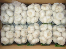 fresh natural white garlic for sale