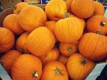 Fresh Pumpkin/ Pumpkin