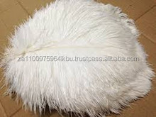 Best Quality Raw Pattern ostrich feathers