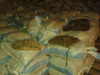BEEF OMASUM MARKET / BEEF SALTED OMASUM / SALTED BUFFALO OMASUM