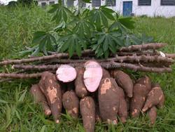 Vietnam low price tapioca starch/cassava flour for tires industry