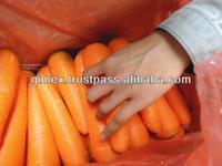 Fresh Carrots export to Dubai market