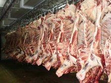 HALAL Frozen Lamb, Mutton, Beef, Veal ,Goat, Camel, Horse Meat
